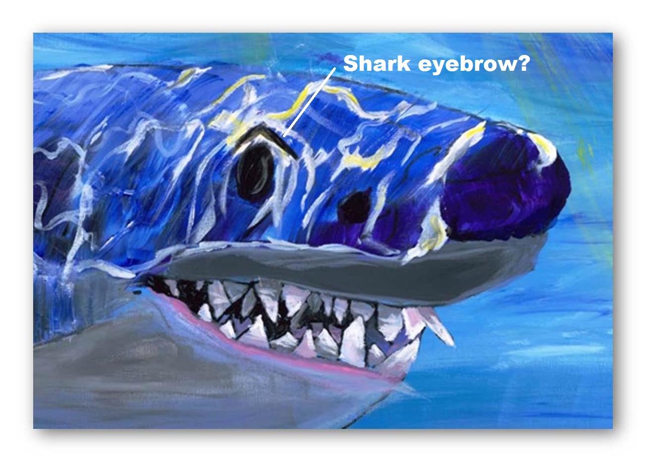 shark eyebrows.jpg