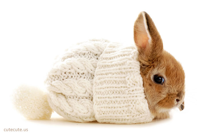 46461-bunnies-cute-rabbit.jpg