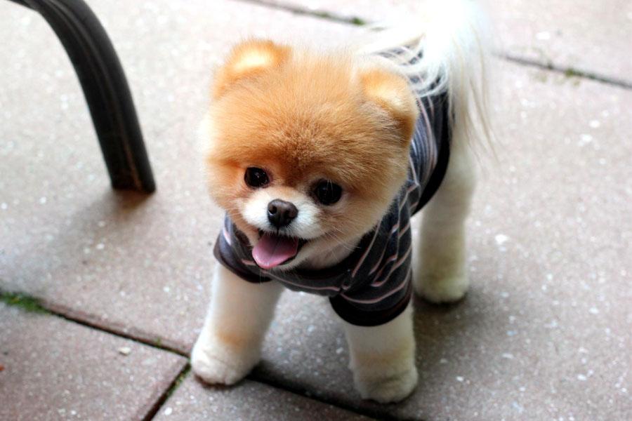 Boo-The-Dog.jpg