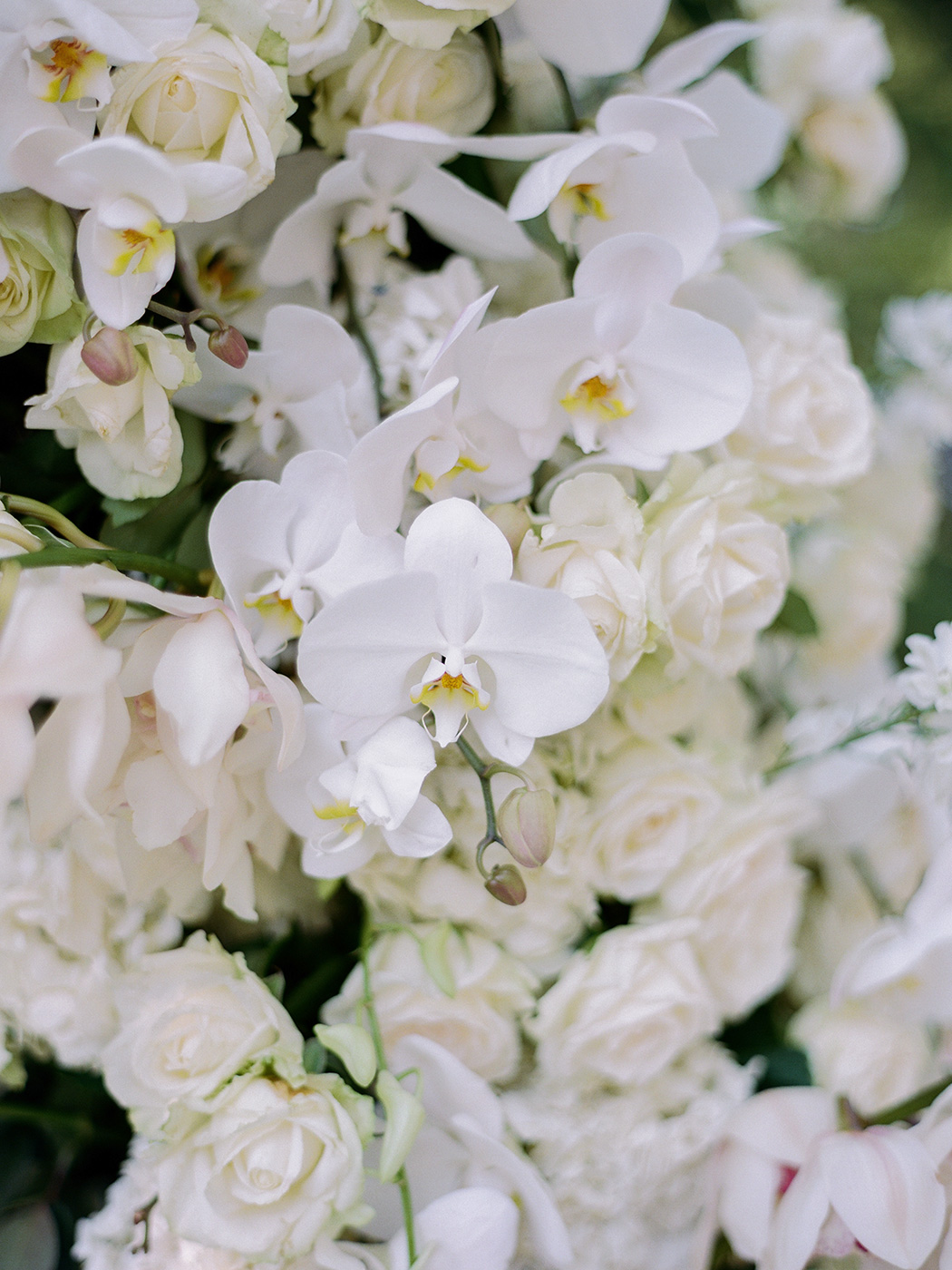 Florals | Rensche Mari Photography