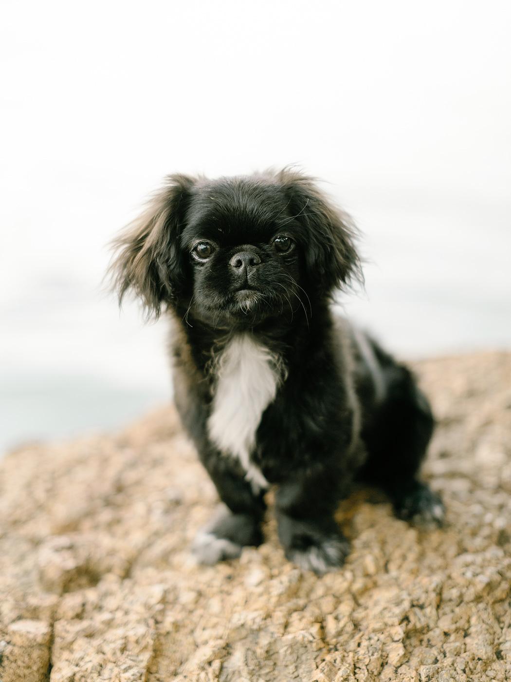 Cute Pup   Rensche Mari Photography