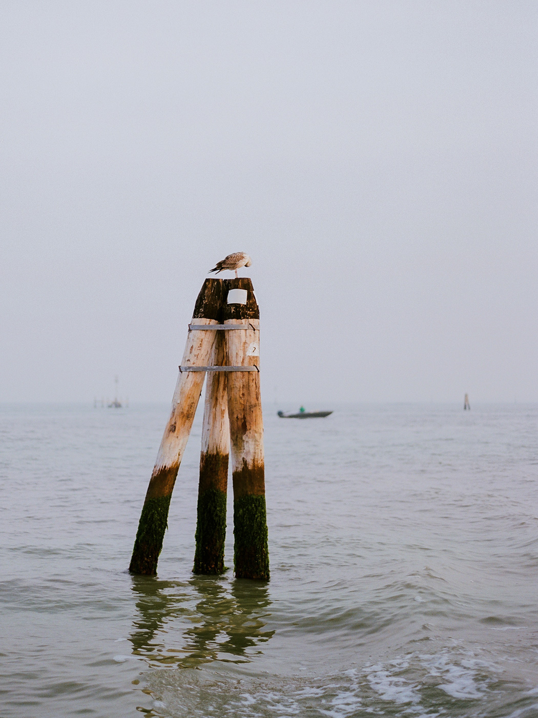 006S&E_Venice.jpg