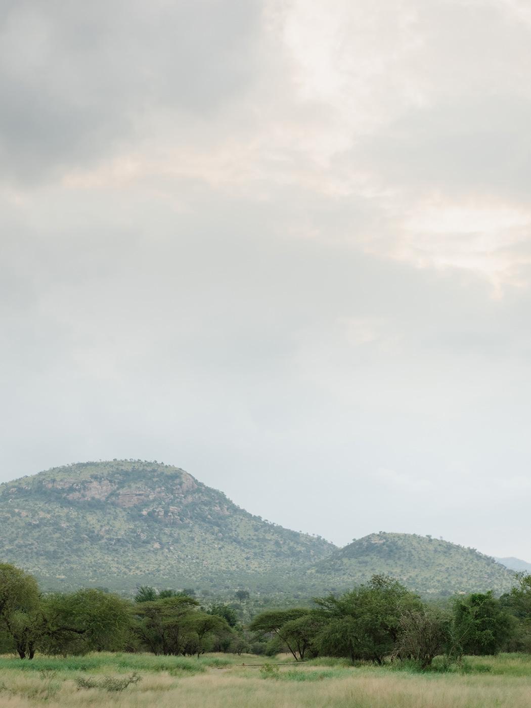 Africa Bushveld | Rensche Mari