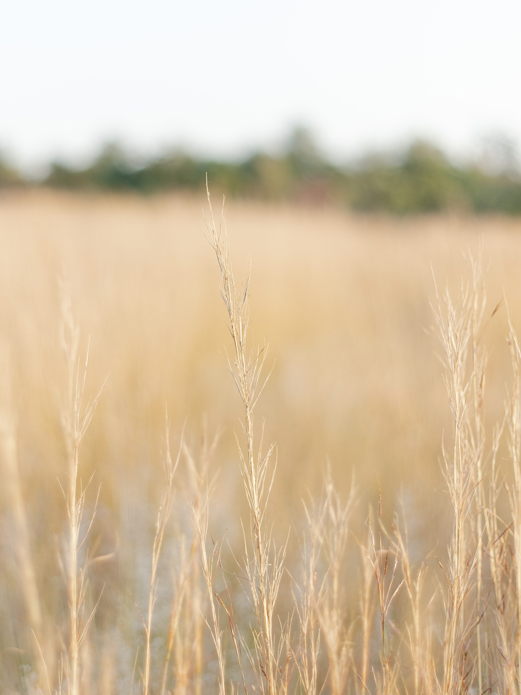 Fields of Gold | Inimitable Venue