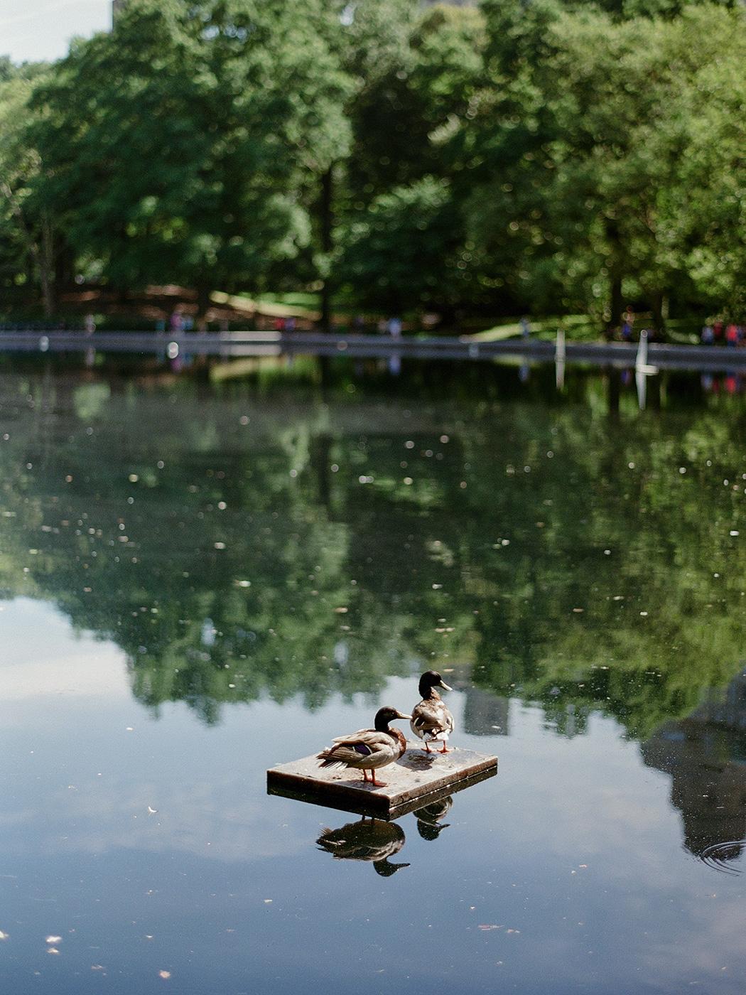 Central Park   Rensche Mari