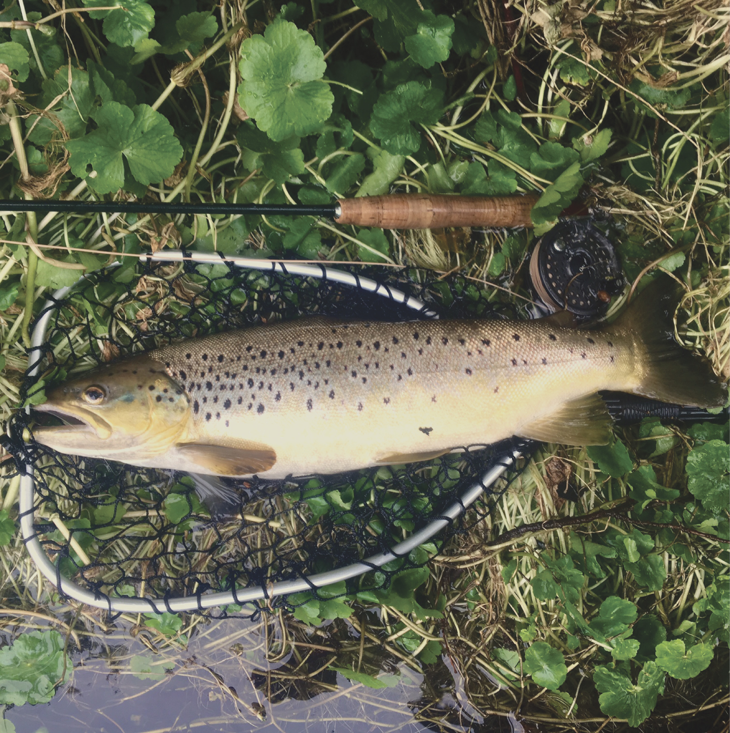 A PB for Damon with a Wandle Brown caught on a size 14 shrimp, weighing in at 5lb