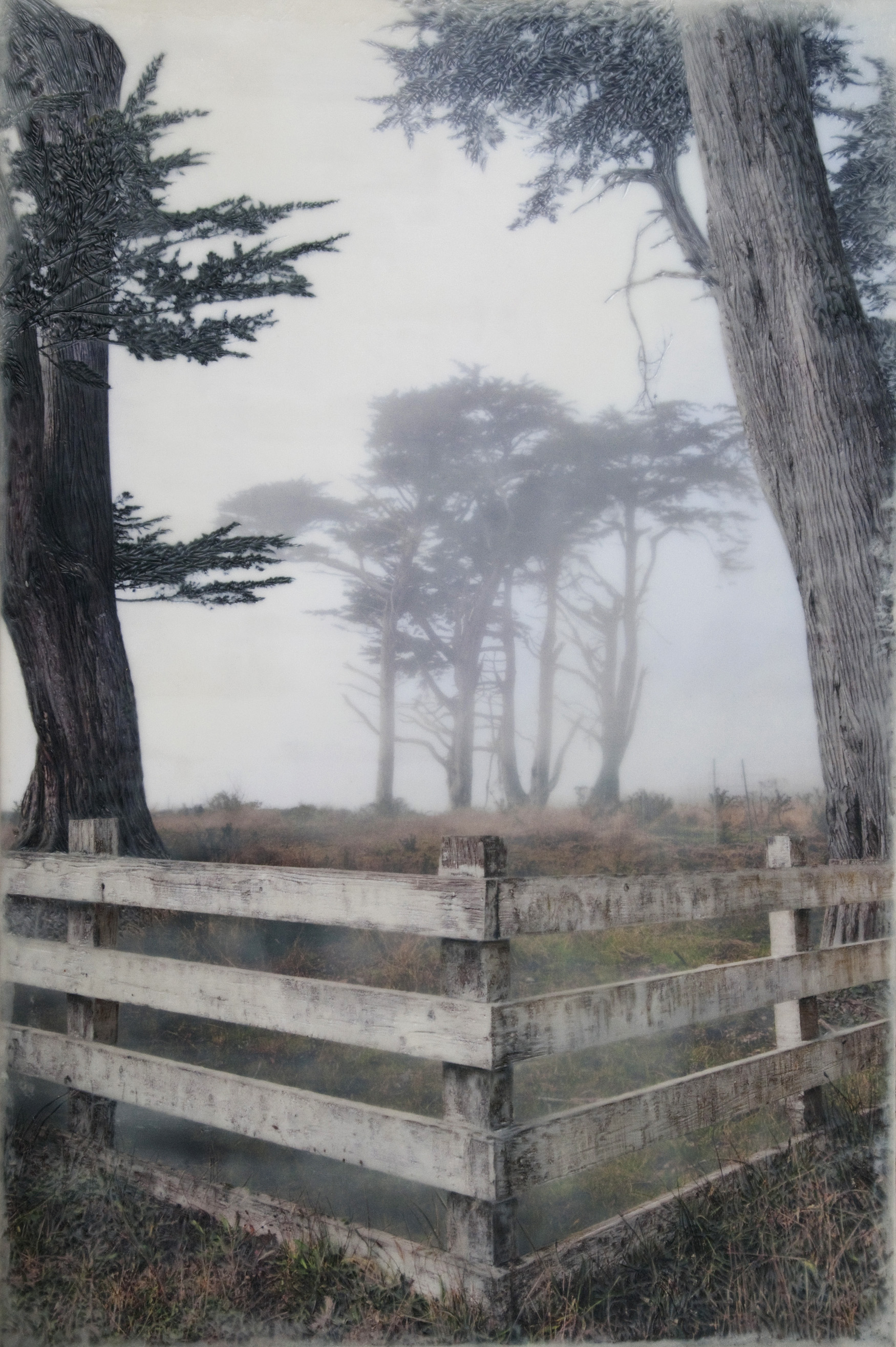 Fence with Cypress   (NA)