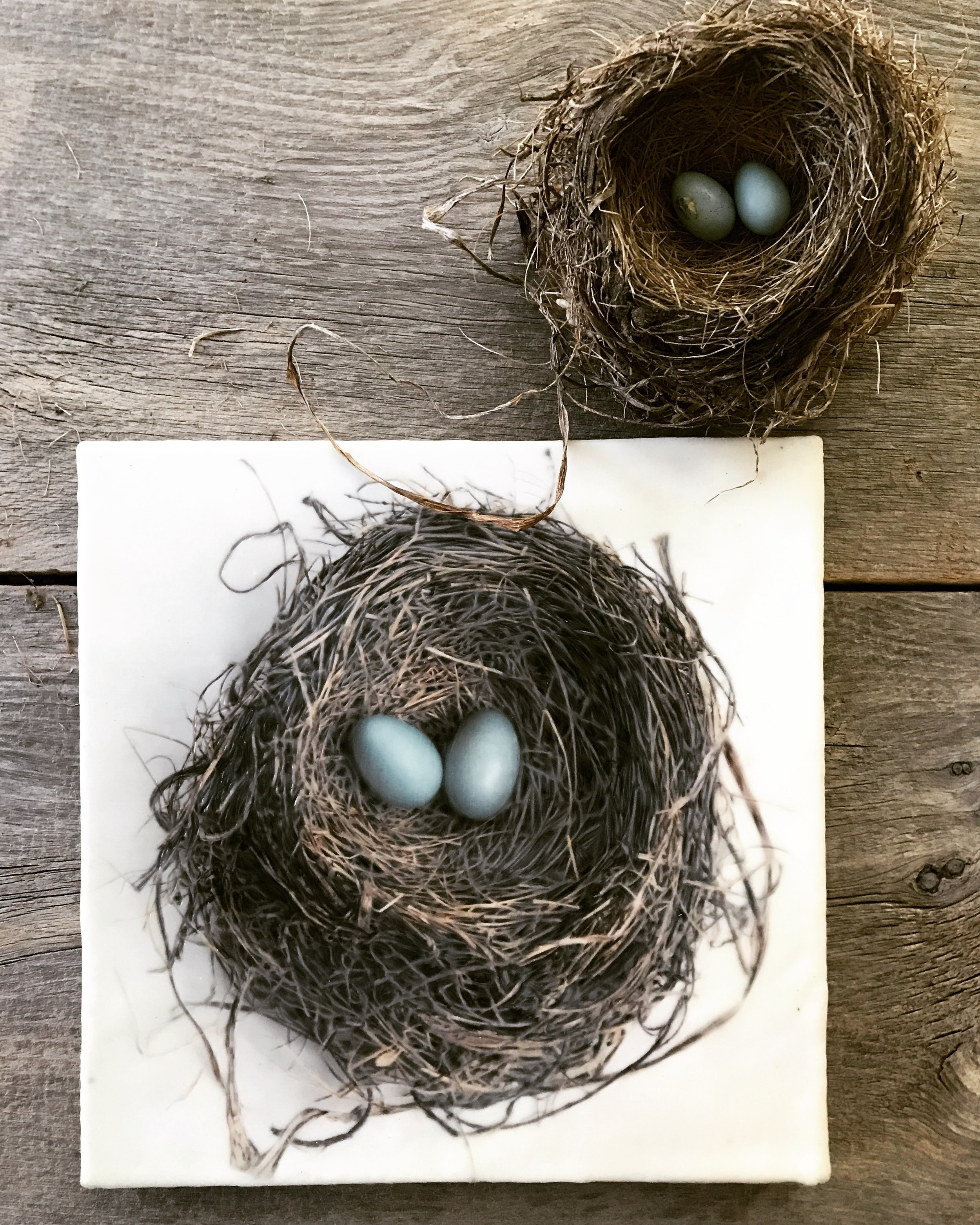 Nest with Two Eggs   (12x12)