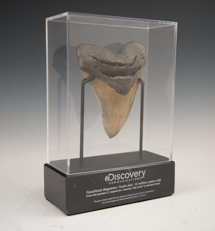 Custom Magalodon Tooth Award