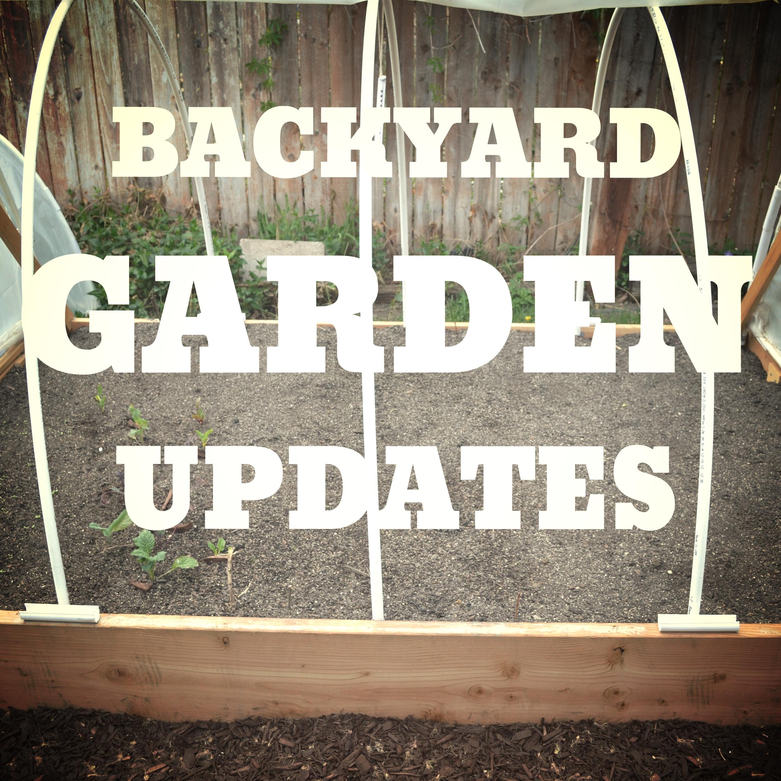 BackyardGardenUpdates
