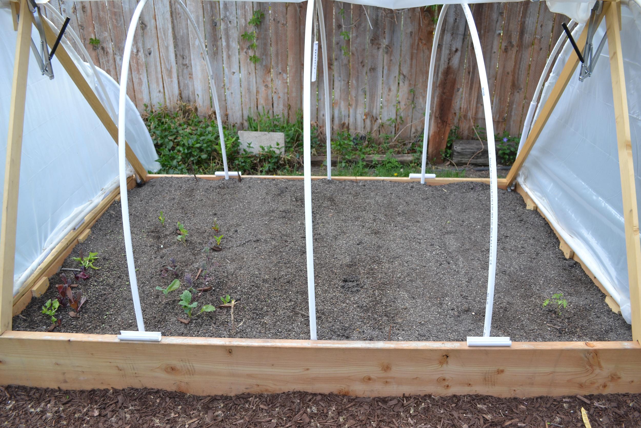 freshly transplanted lettuce, kale, and swiss chard starts on the left.