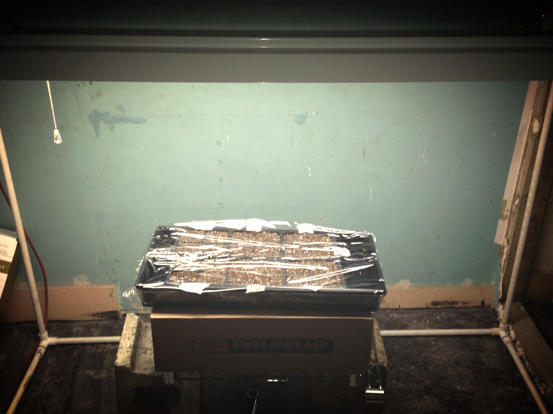 basement bootleg seed starting setup.