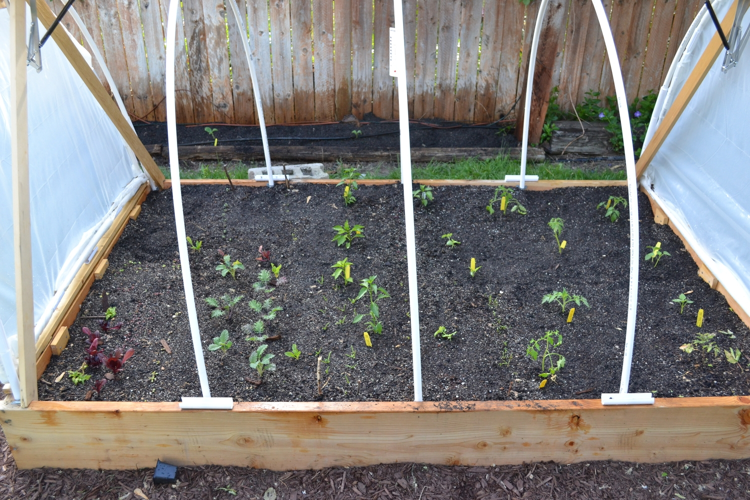 Here are the new babies in their new home.  Tomato, tomatillo, various peppers , and eggplant on the right half of the raised bed.