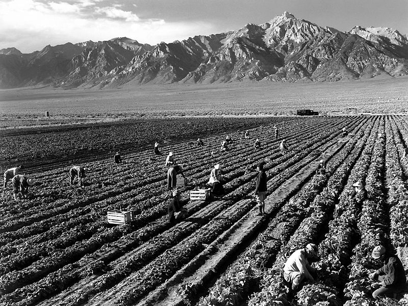800px-Ansel_Adams_-_Farm_workers_and_Mt._Williamson.jpg
