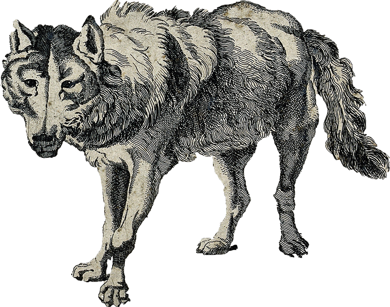 wolf_800px.png