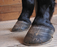 Even retired horses need their feet done, it's a big clue on how well they care for their animals