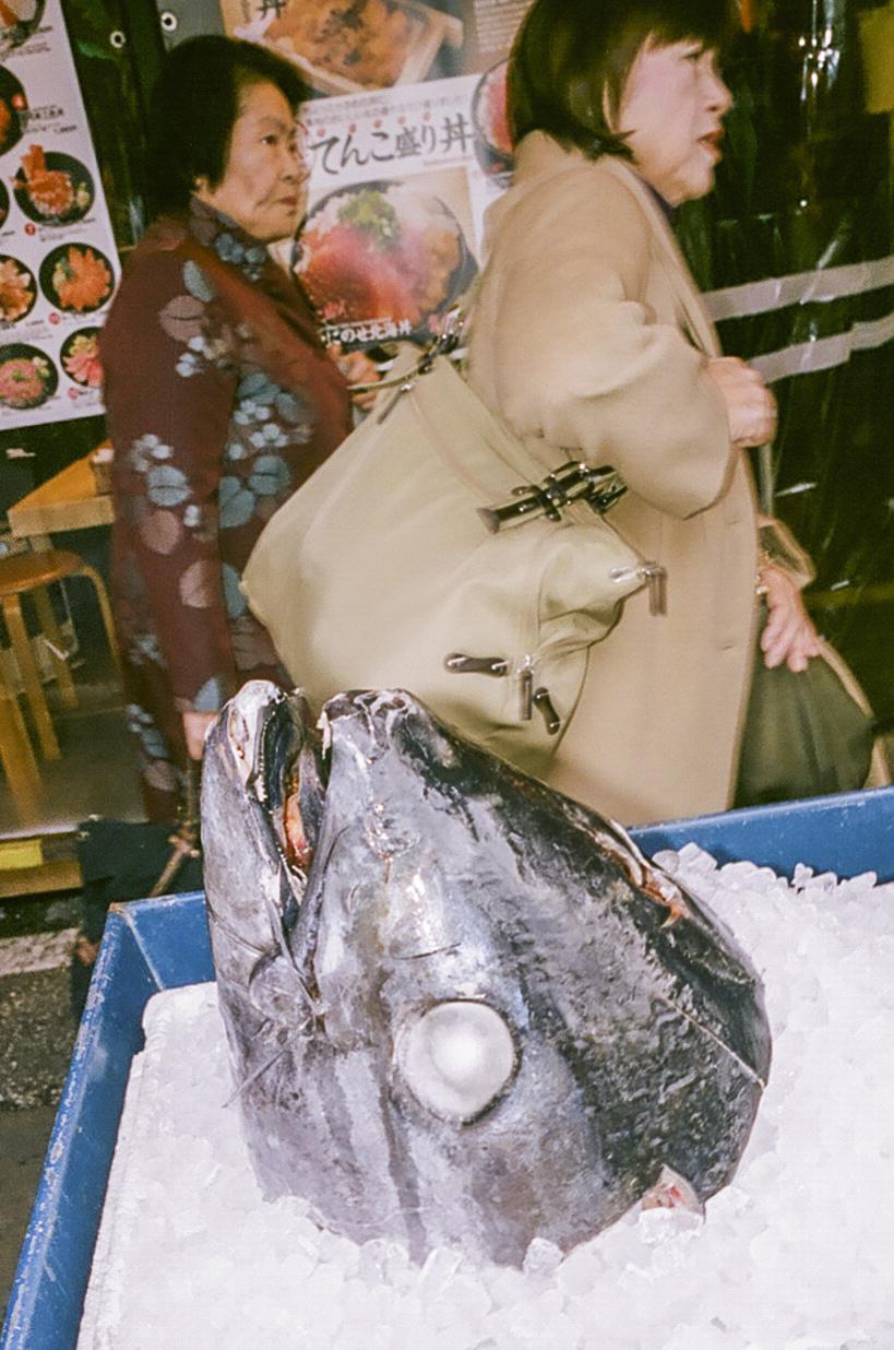 fish head japan sharokh mirzai.jpg