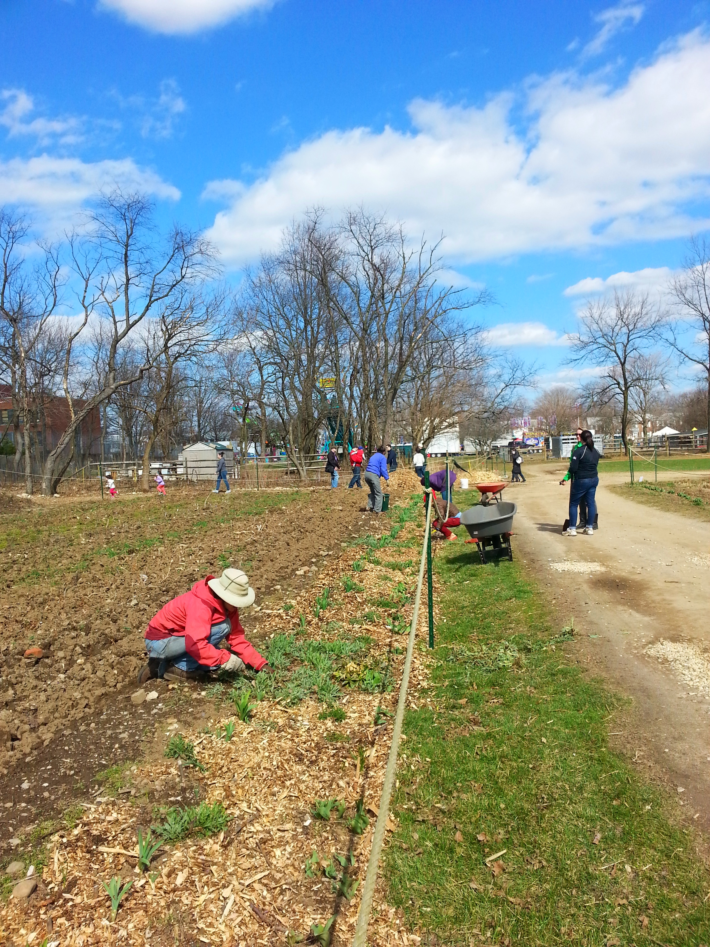 Mulching the perennials that border the vegetable fields