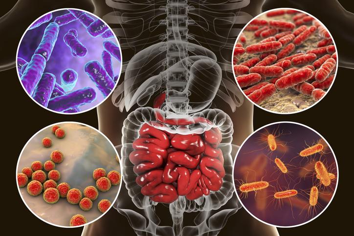 intestinal microbiome.jpg