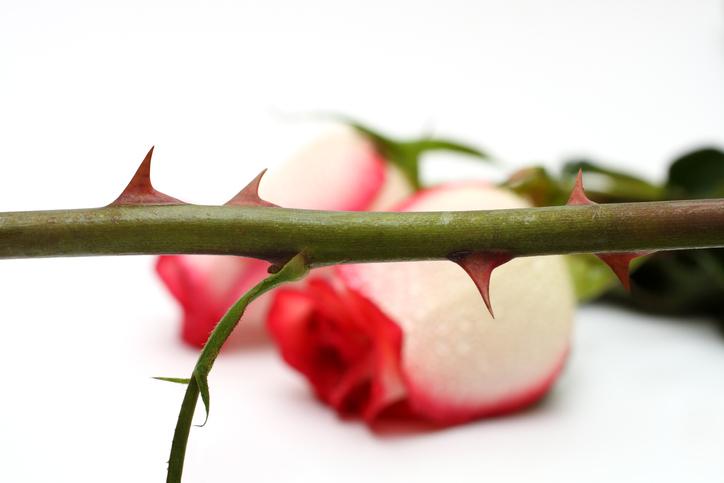 Rose Thorn.jpg