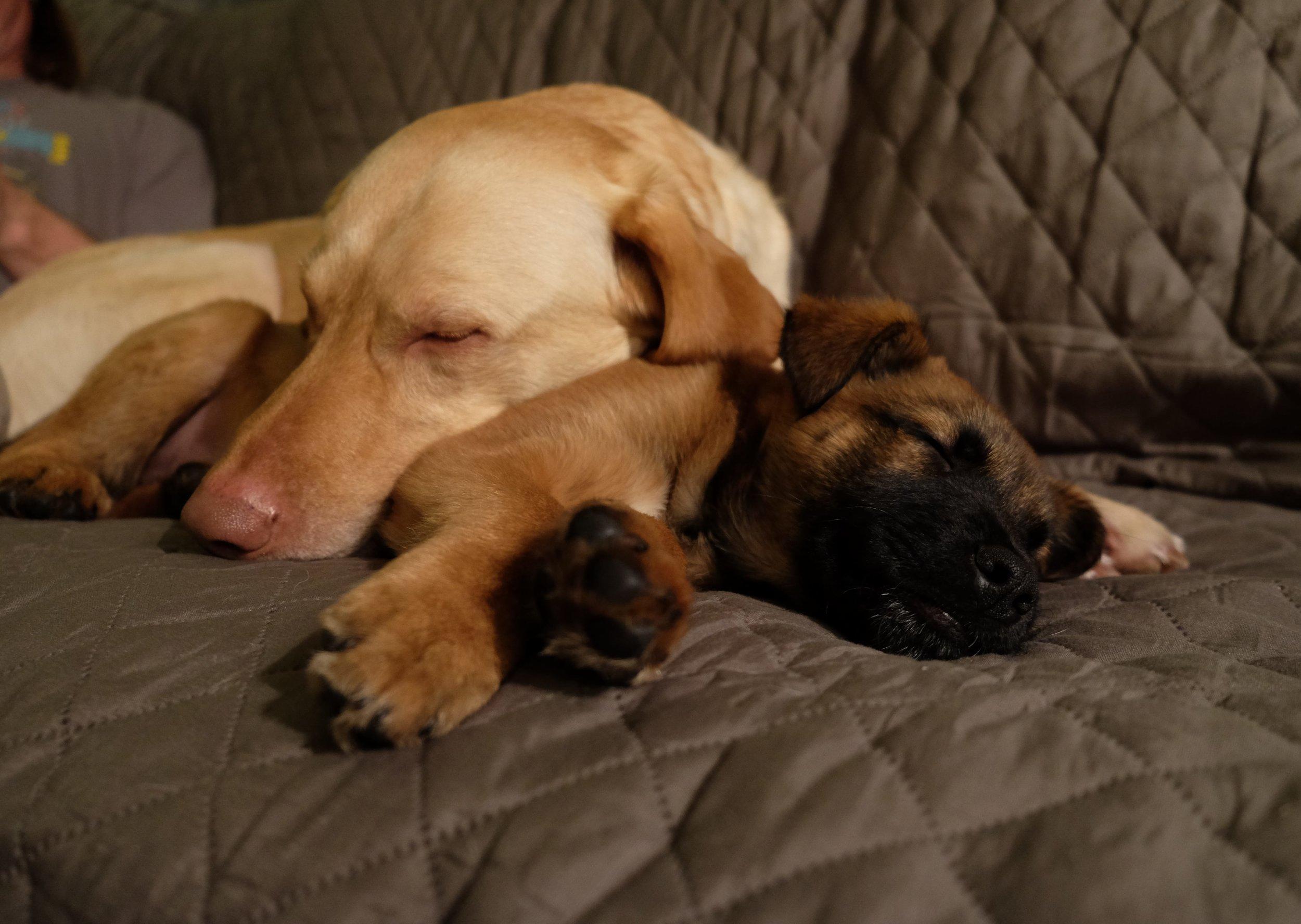 Becca.Tarbox.DogPackrafting3-min.jpg