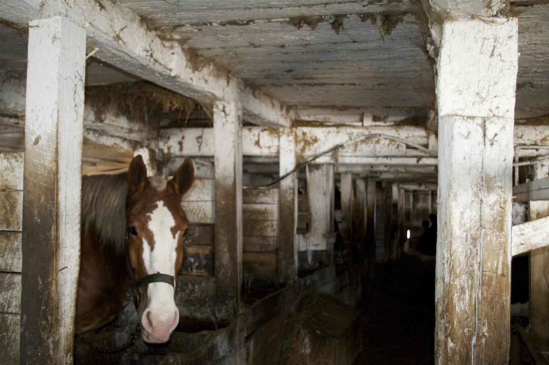 barn horse.jpg