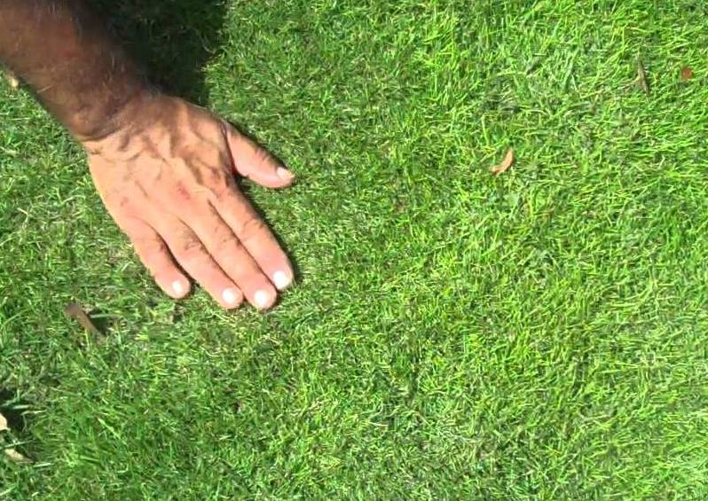 Get to Know Your Lawn.jpg