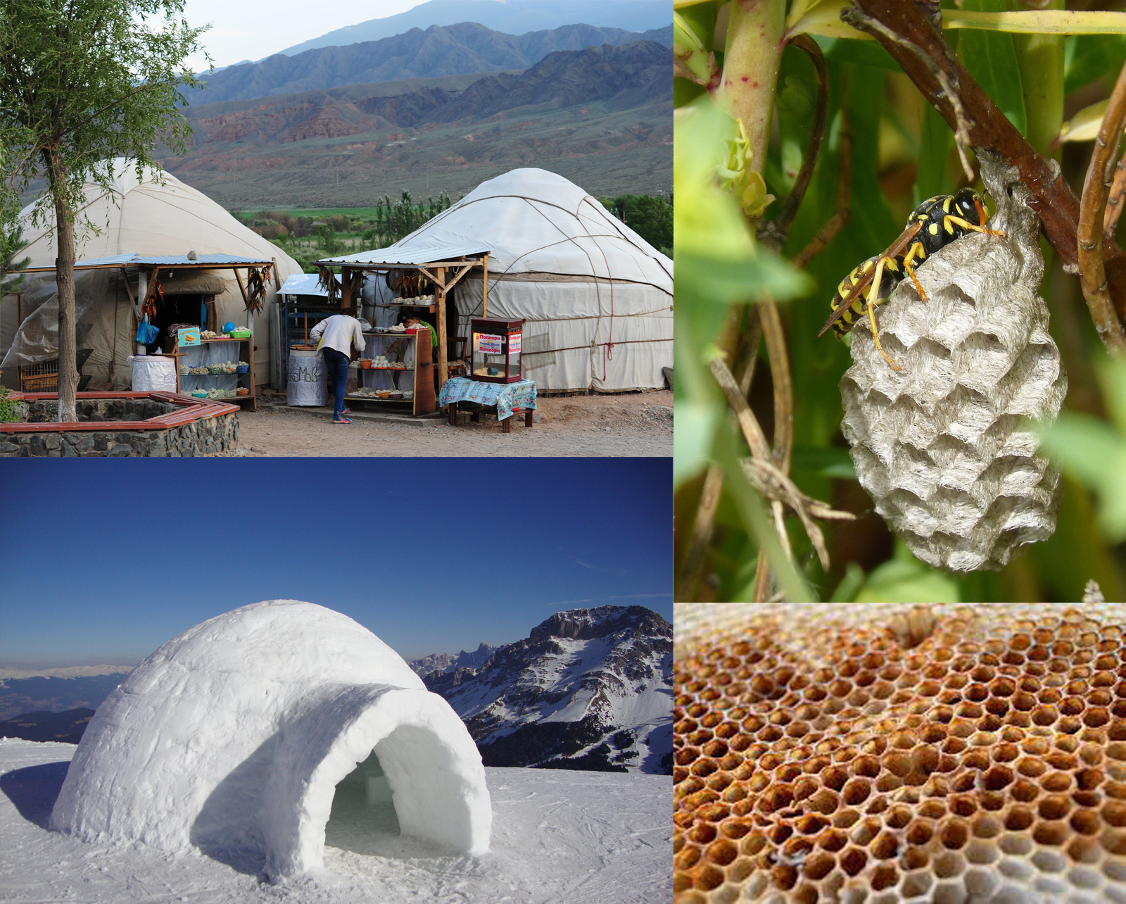 STRUCTURAL INSPIRATION FROM NATURE - Instead of the familiar tents and teepees currently in the market today, the Nomad Shelter takes mimics the shapes of nature's structures