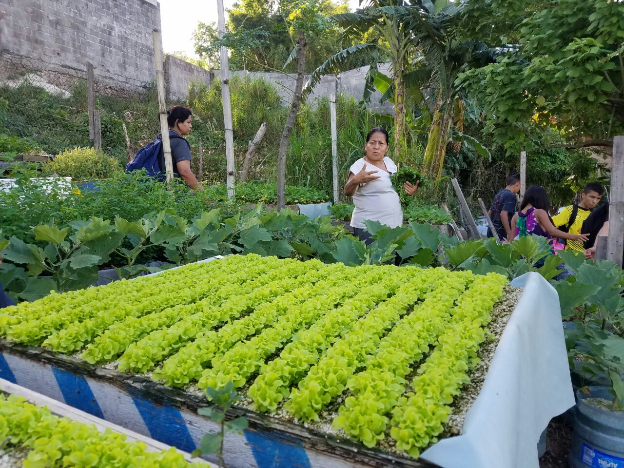 Through this project, hydroponic gardens have been established in six target communities.
