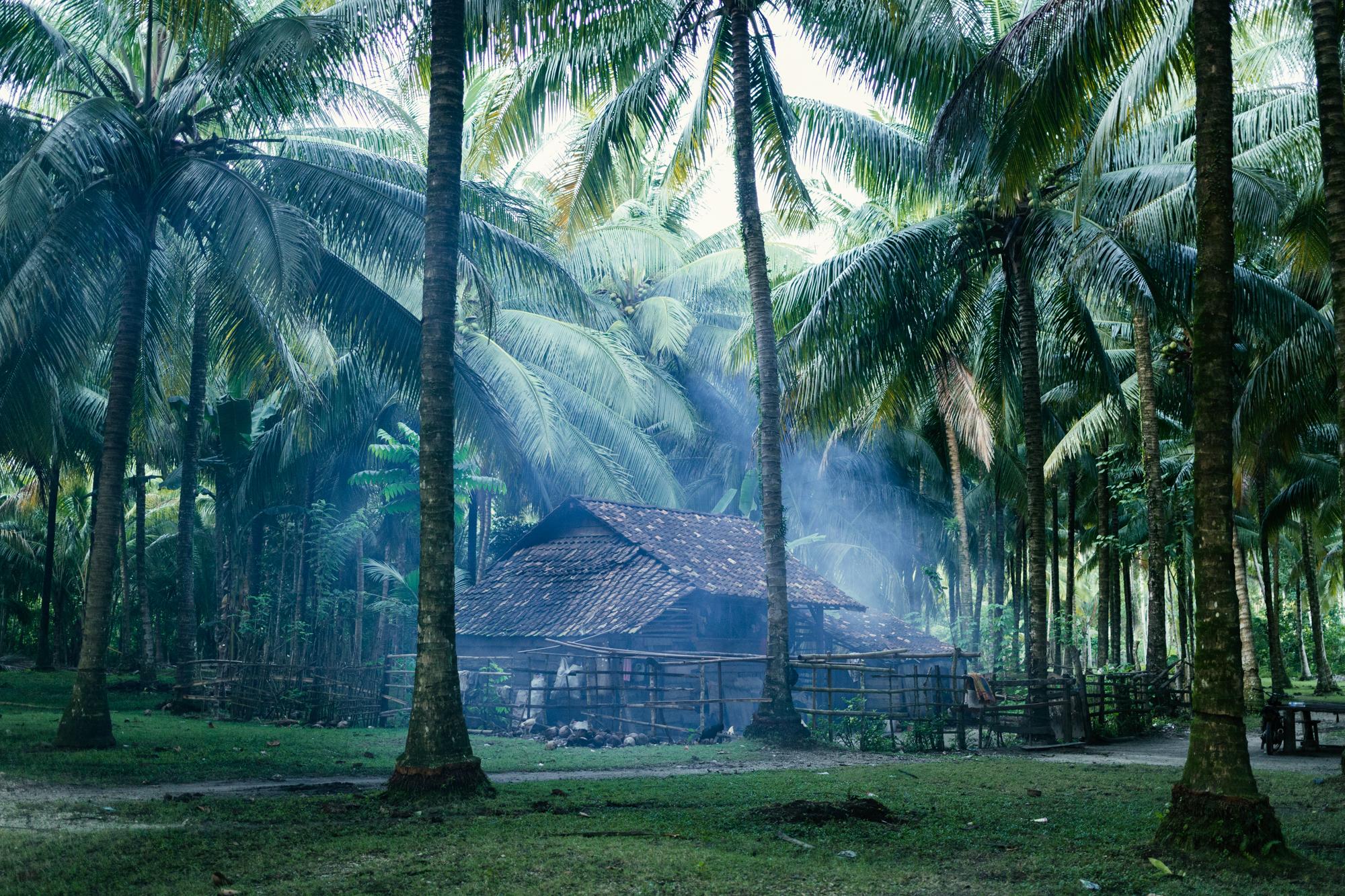 Beneath The Canopy, Sumatra.JPG