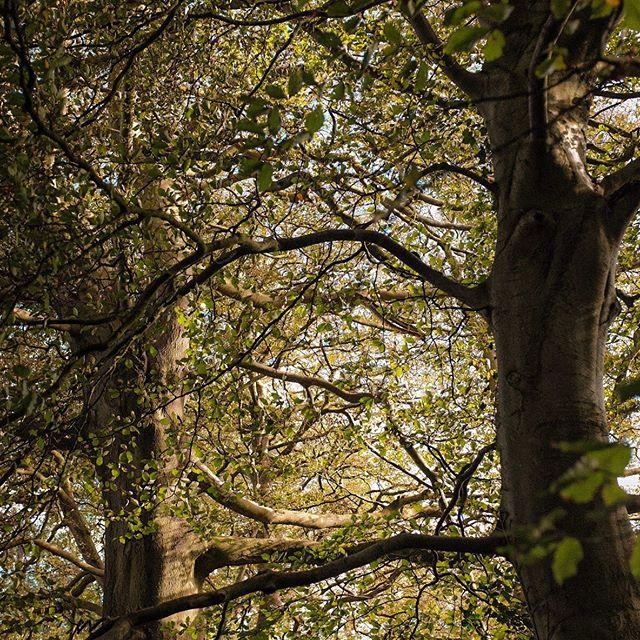 Days be getting short #autumn #wales #trees #fujifilm #fujifilmx100t #fujifilmglobal