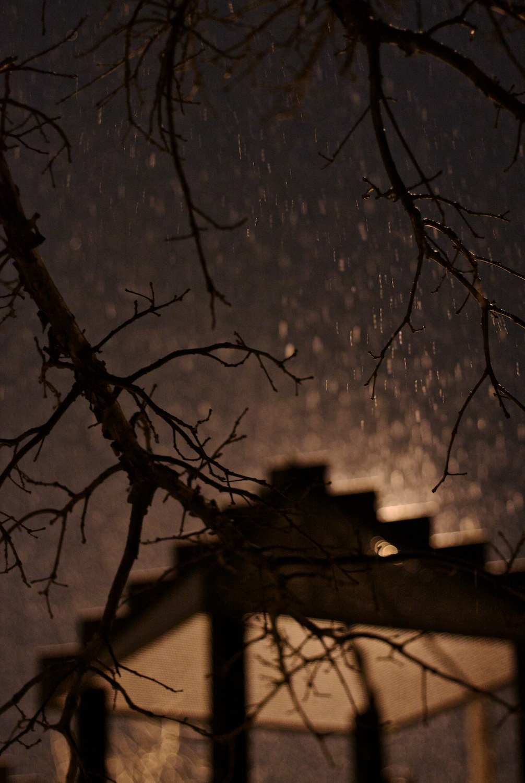 8Gale Straub Night.jpg