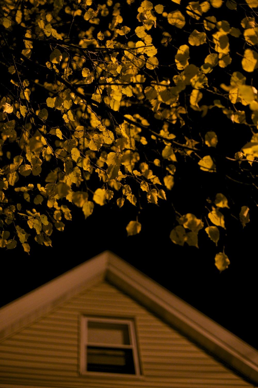 15Gale Straub Night.jpg