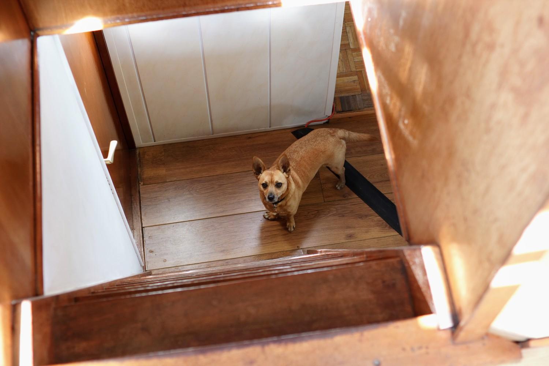 bailey_the_dog_by_ross_farley.jpg