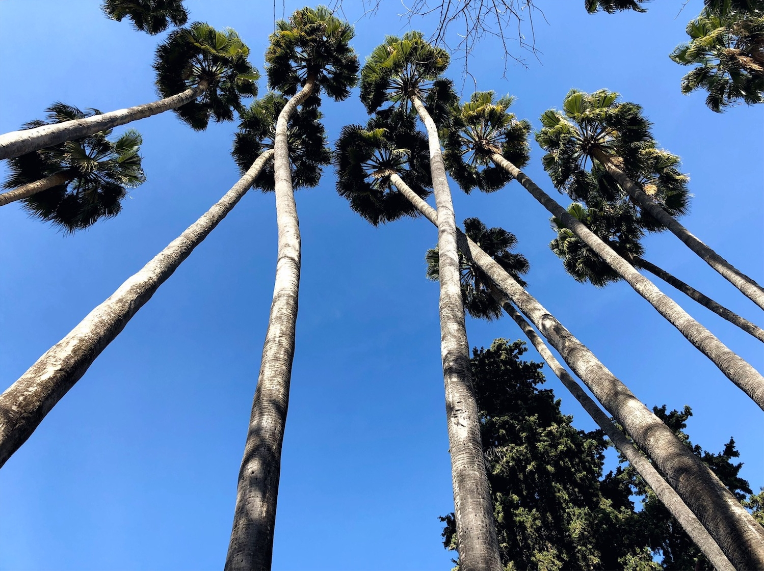 trees real alcazar by ross farley.jpg