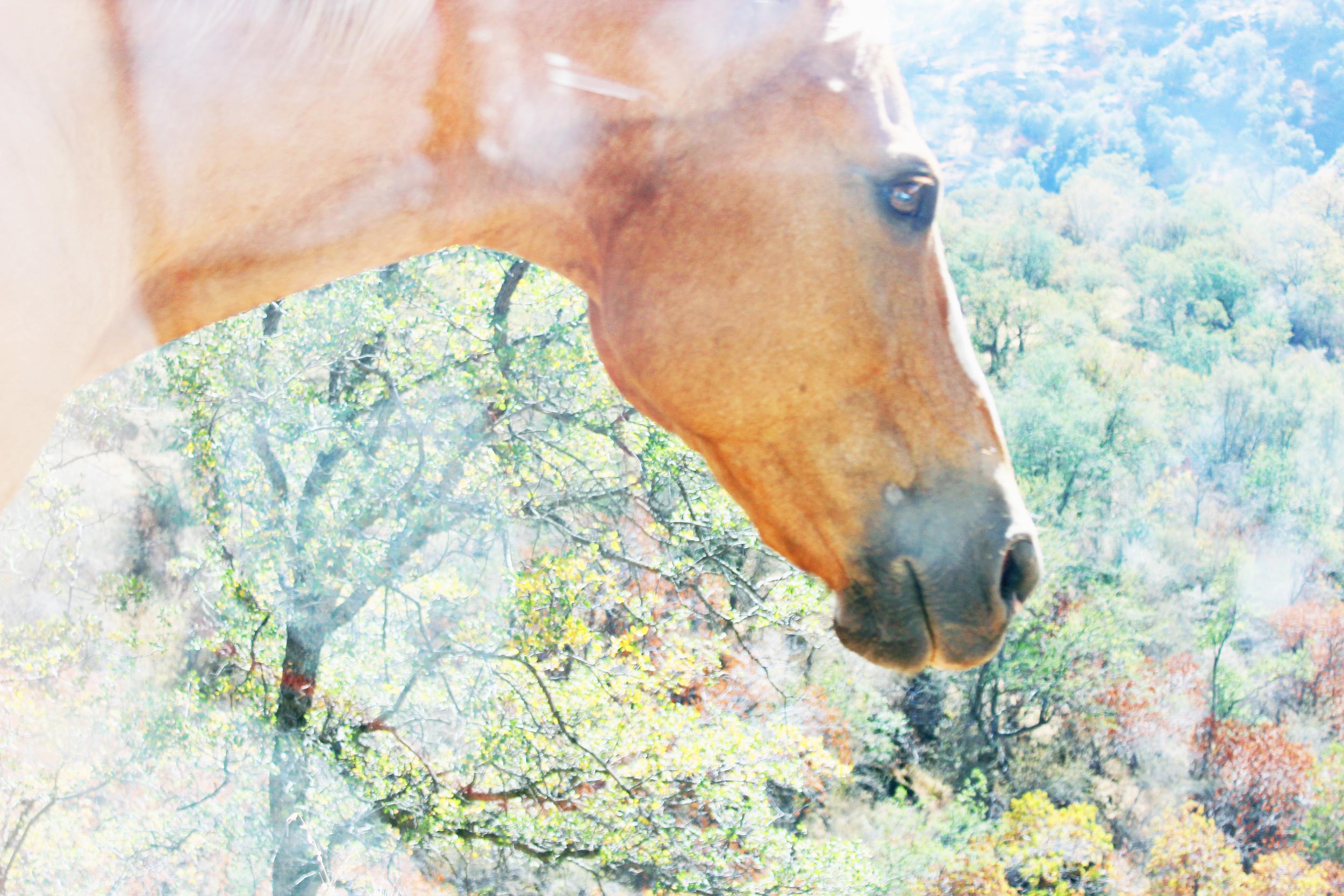Wild Horse.jpg