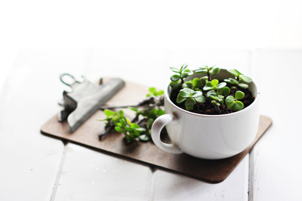 Mug Planters | Most Popular in March