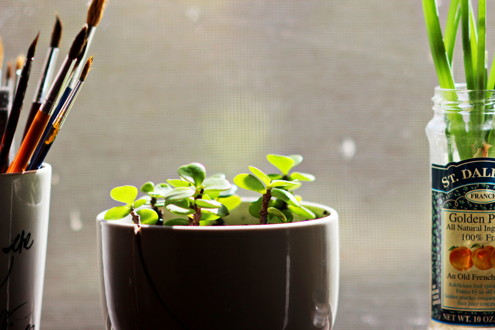 mug planters | most popular in april | the free spirited