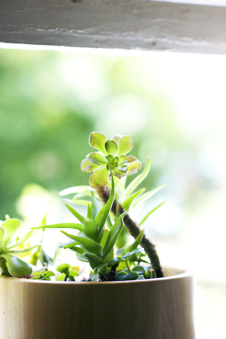 Salad Bowl Succulent Planter