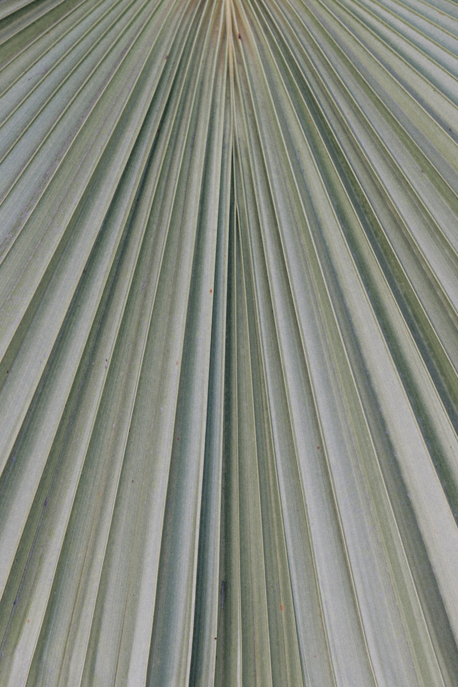 palm pattern pale (1 of 1) copy.jpg