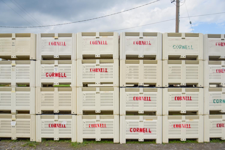 EL_Cornell_Tour_040.jpg