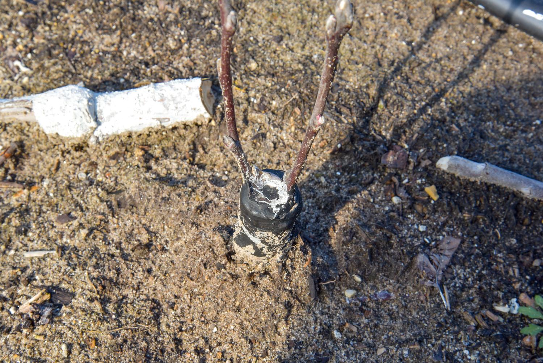 EL_Top-Wire_Selects_008.jpg