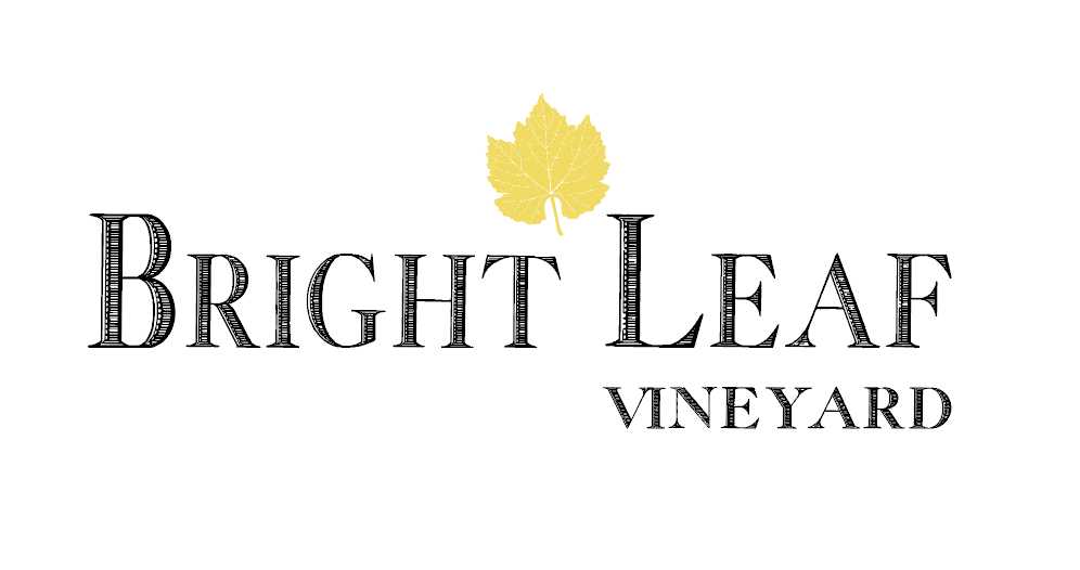 3 Logo with Yellow Leaf