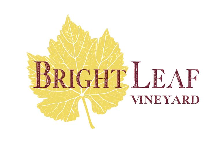 6 Logo Yellow Leaf Burgundy text