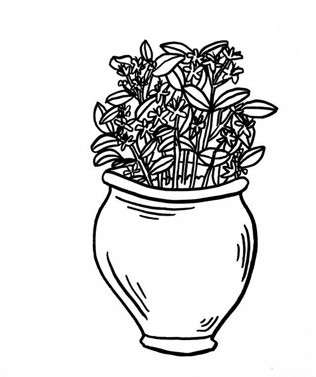 Just a quick drawing for work today. My tablet pen broke and I'm stuck waiting for a new one.... #stjohnswort #plantdrawing #femaleillustrator #illustration #plantsplantsplants #floweringplants