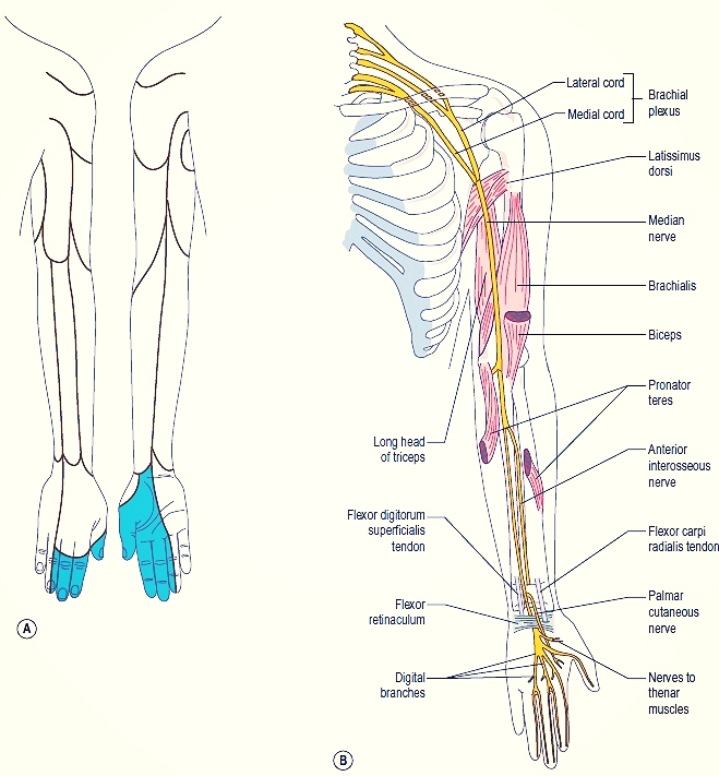 Image courtesy of http://body-disease.com/wp-content/uploads/2013/01/A-The-cutaneous-distribution-and-B-course-of-the-median-nerve.jpg