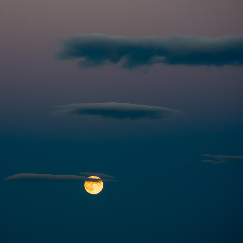"""Wine Moon I"""