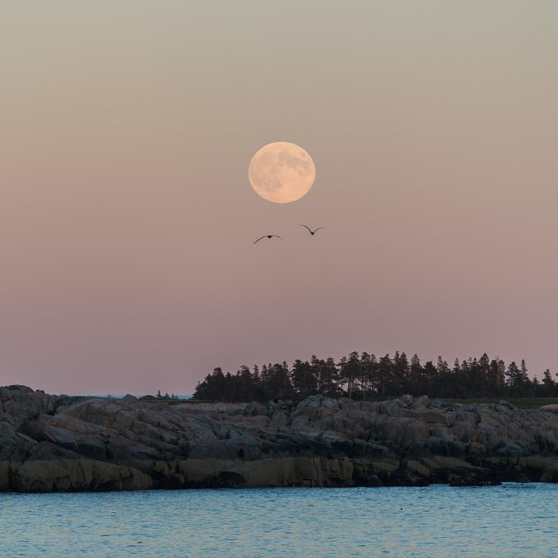 Moon of Plenty I