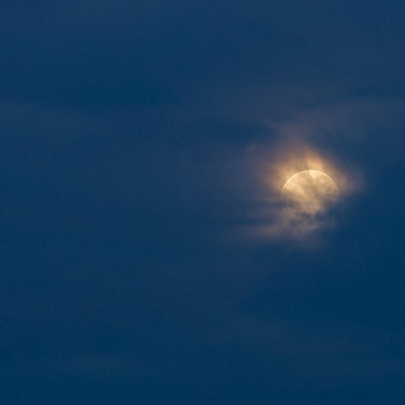 Summer Moon III