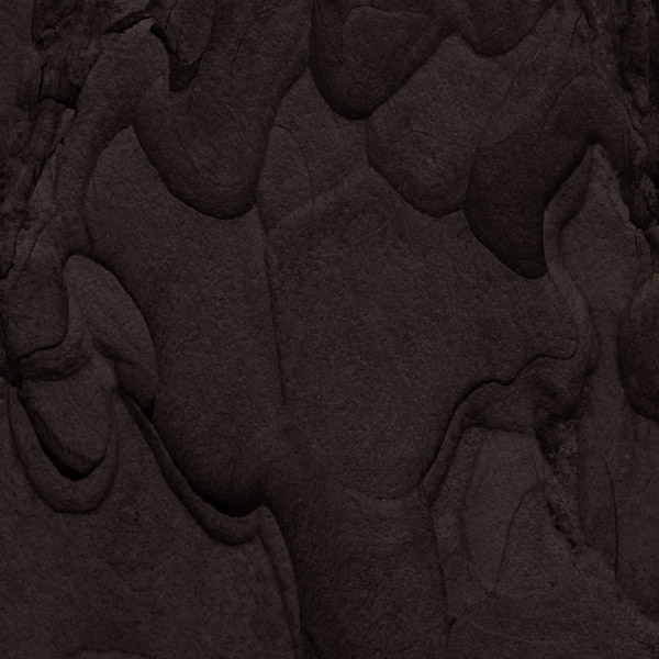 Codex Natura #15